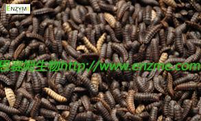 黑水虻幼虫自动化反应设备生产线